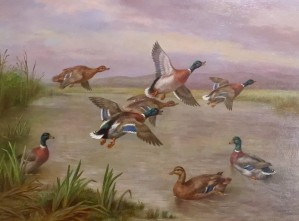 Mallard's Taking Flight & Returning
