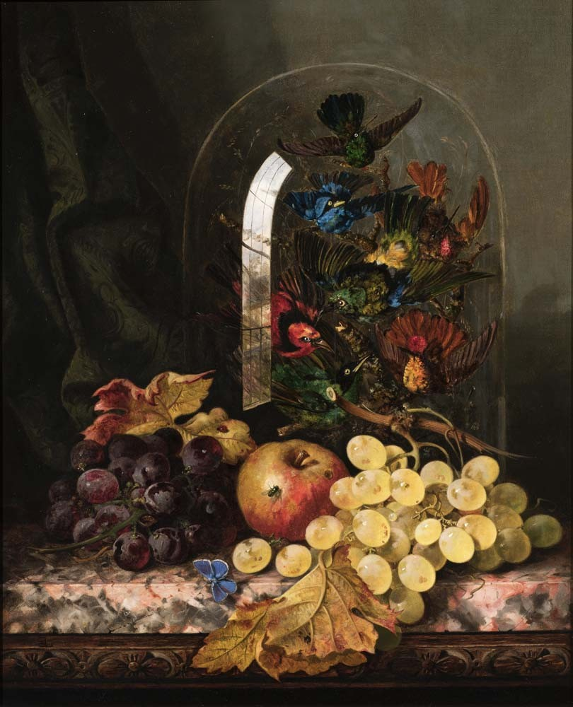 Still Life of Mixed Fruit & Taxidermy of Exotic Birds