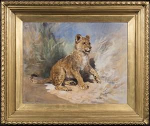 A Lion Cub
