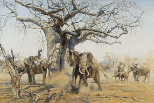 Elephant in the shade of an old Baobab Tree - SOLD