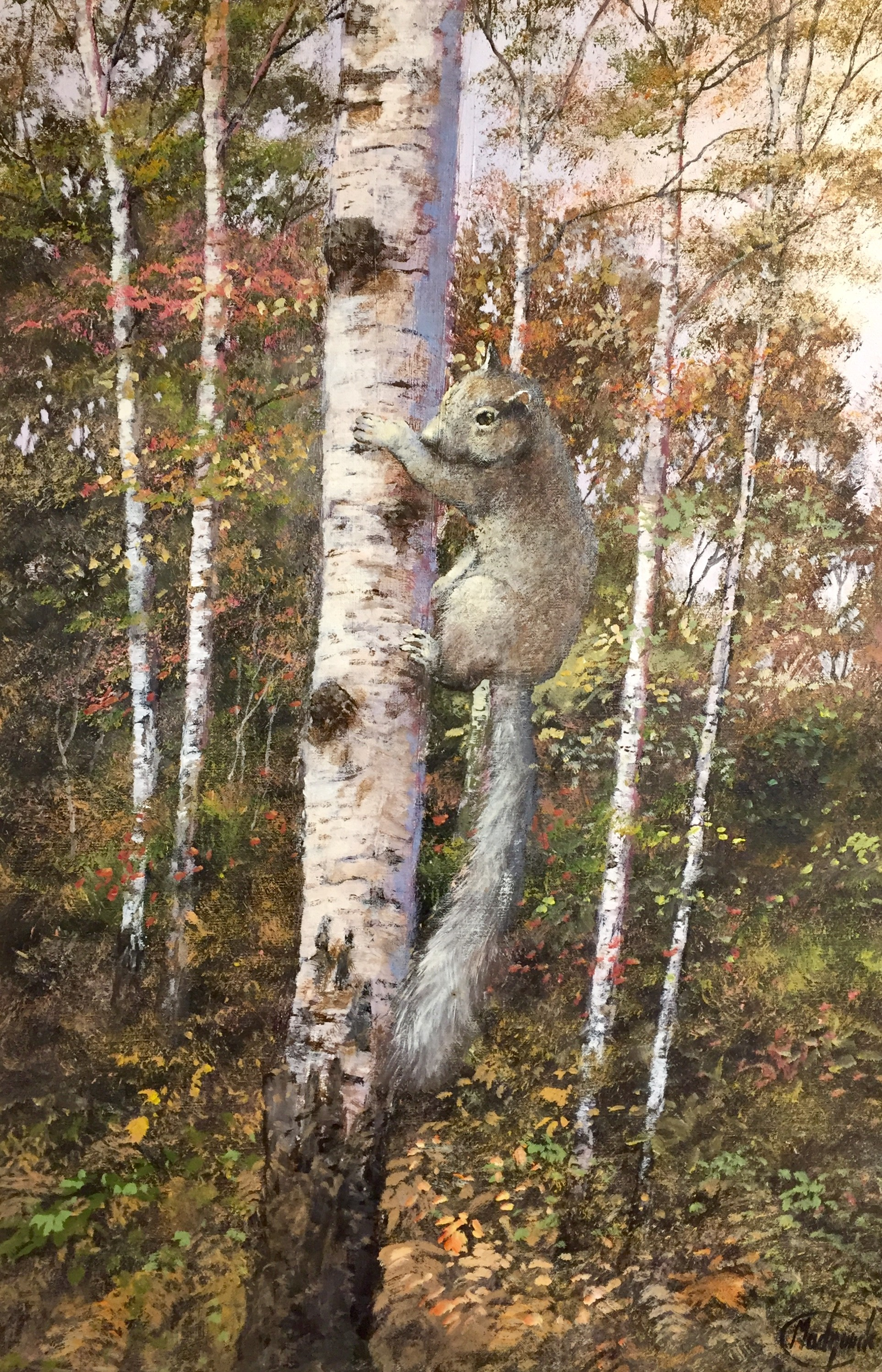 The Squirrel on a Silver Birch - ON SALE