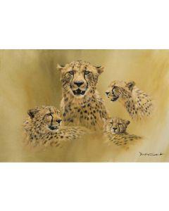 Cheetah Sketches